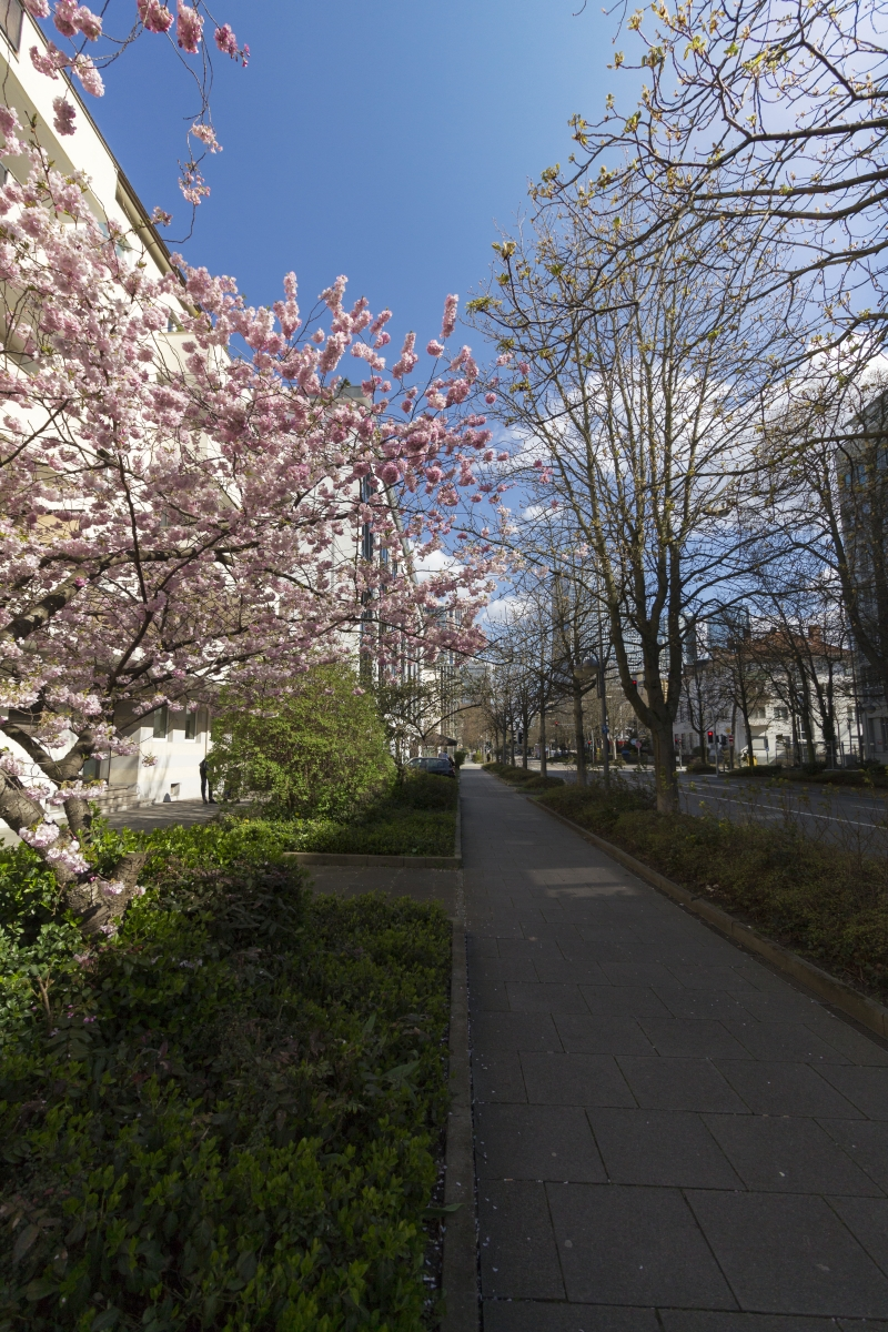 Frühling Frankfurt