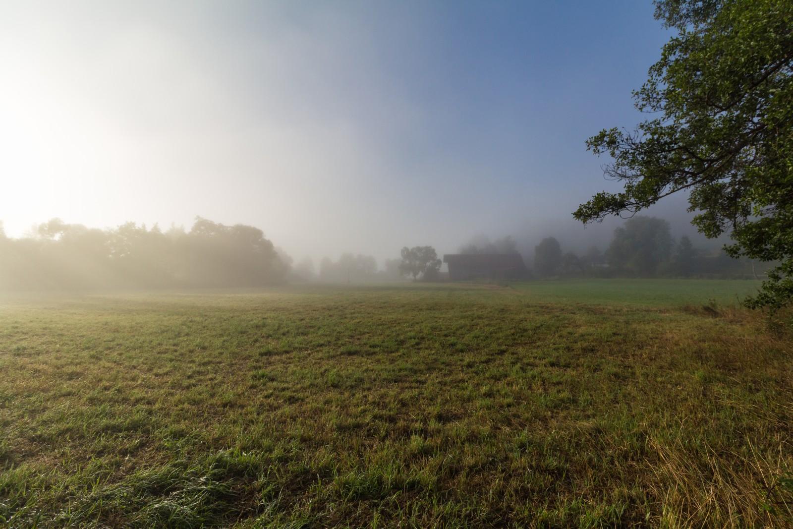 Wiese Baum Nebel