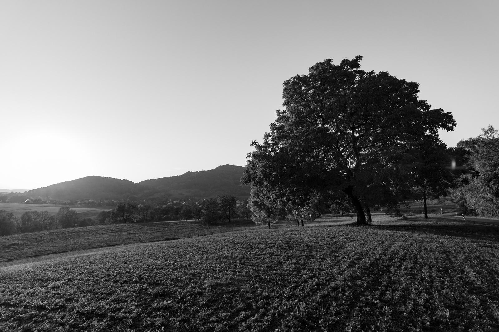 Ein stattlicher Baum