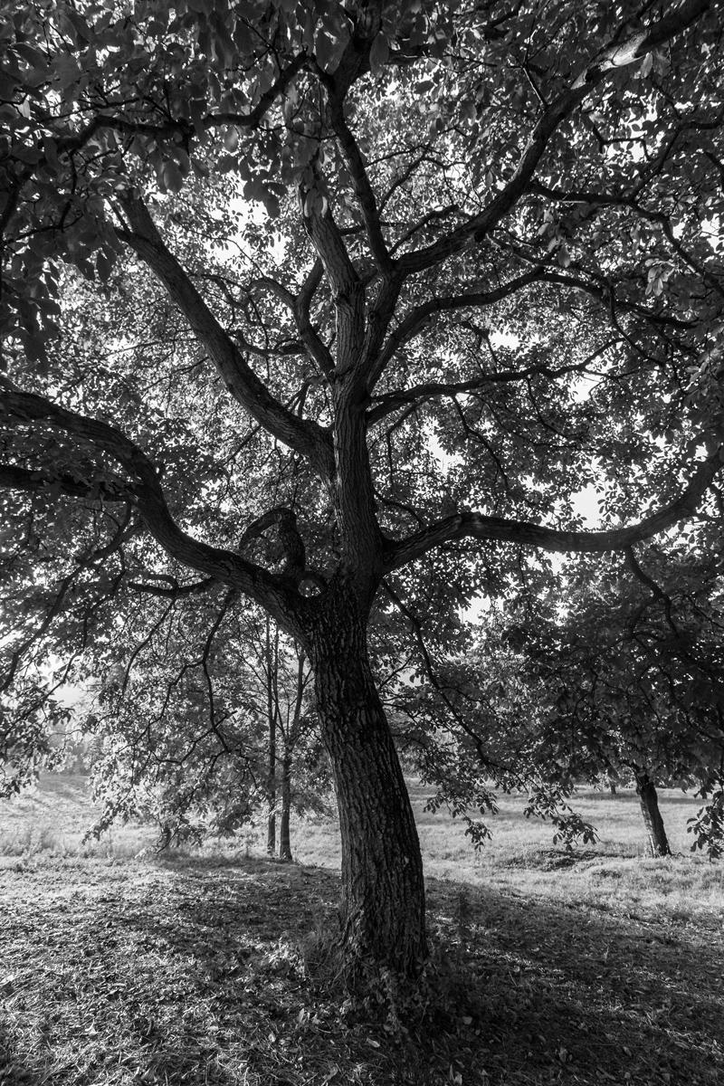 Baum von innen